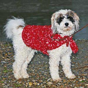 Dog's Coat