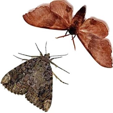 Busting Clothes Moth Myths