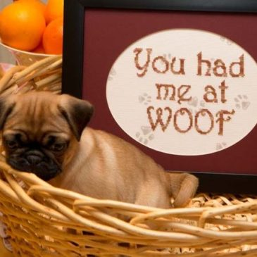 You Had Me at …Woof! Cross Stitch