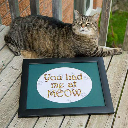 You Had Me at Meow…