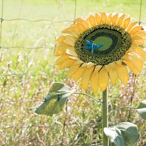 A Global Warming Sunflower