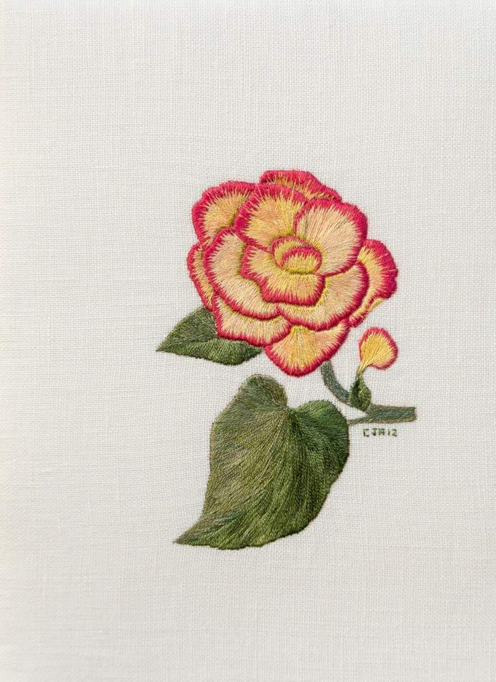 Sweet Begonia